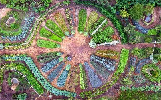 Polyculture Et Compagnonnage Des Plantes