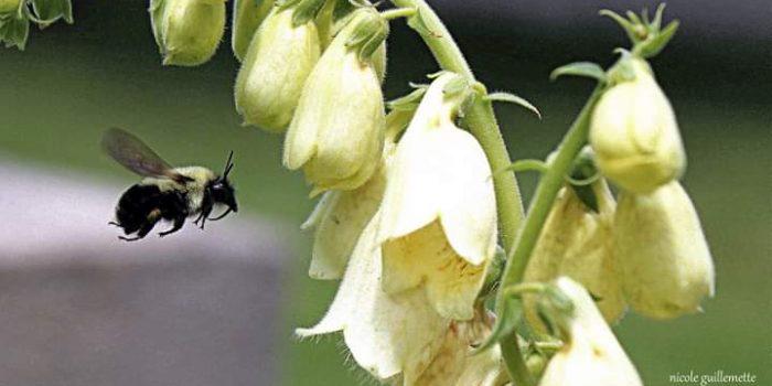 7 Plantes Pour Remplacer Les Produits  Chimiques Au Jardin